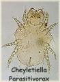 Cheyletiella Parasitivorax
